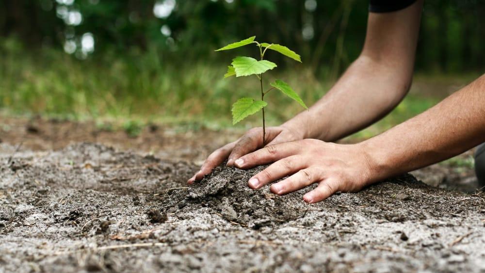 Un albero per ogni nato: l'iniziativa di Castelfranco Emilia per la settimana Unesco della Sostenibilità Ambientale - ModenaToday