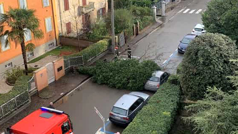 Viale Carlo Sigonio, un albero si abbatte sulla strada